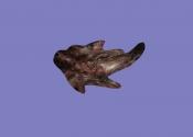Коготь (артефакт АМК2)