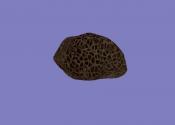 Скипидарник (артефакт АМК2)