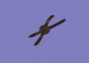 Ведьмин клубок (артефакт АМК2)